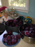 plums-in-kitchen